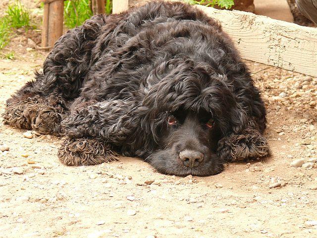fremde hunde auf privatgrundstück